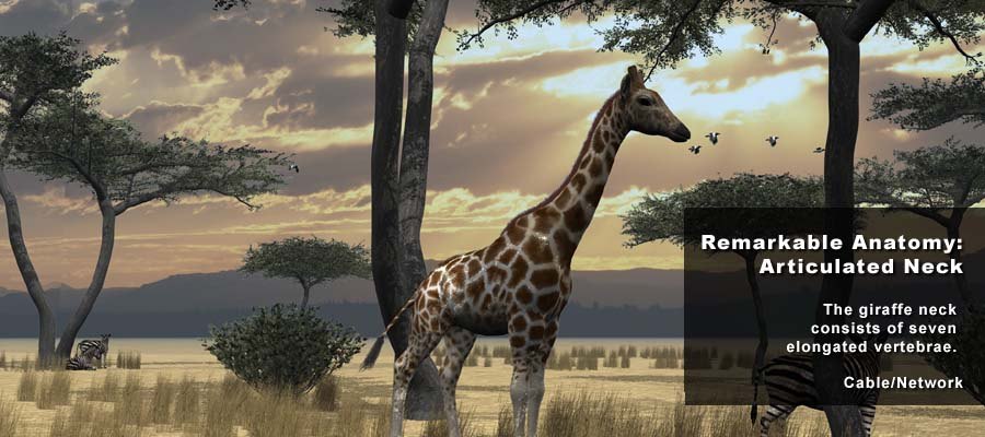 Animation Studio NYC | Animal Science Giraffe 01 | 212-789-9077
