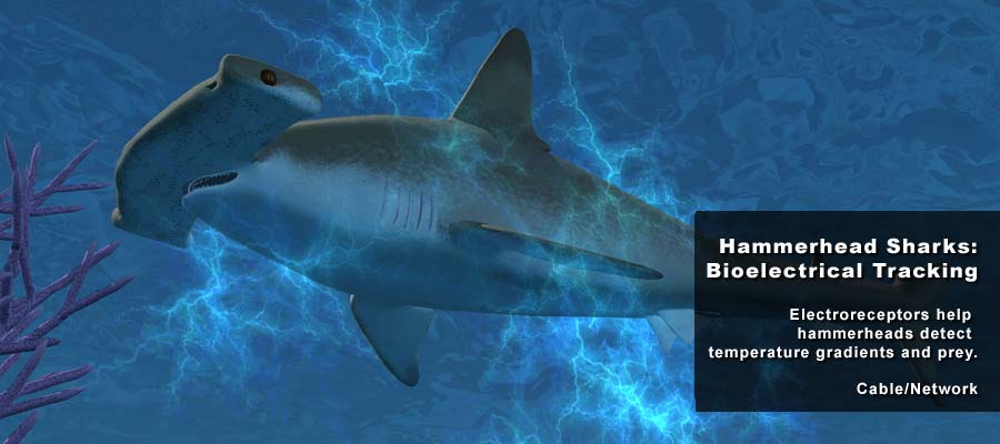 Animation Studio NYC | Animal Science Shark 01 | 212-789-9077