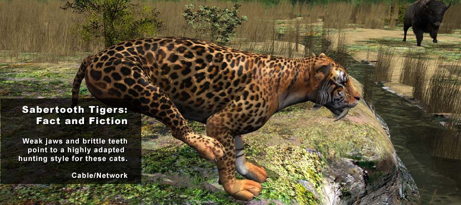 Animation Studio NYC | Animal Science Tiger 01 | 212-789-9077